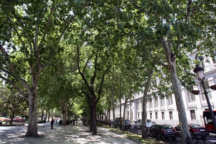 Madrid Boulevards pictures. Fotos de Paseos de Madrid, Paseo de La Castellana...